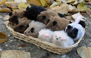 A Basket of Rats!